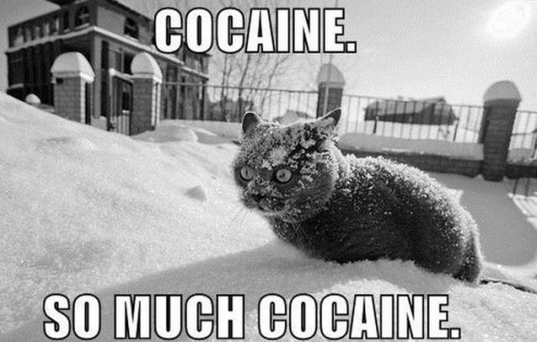 cocaine.....so much cocaine!